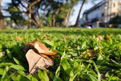 Grama e folhas com fundo borrado Foto de Stock Royalty Free
