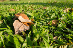 Grama e folhas com fundo borrado Fotos de Stock