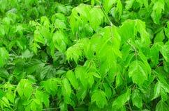 Grama e folhas frescas verdes Foto de Stock