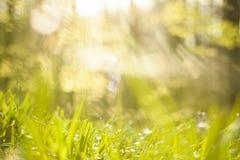 grama e luz Fotos de Stock