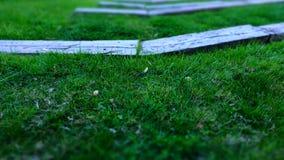 Grama e madeira Fotografia de Stock Royalty Free
