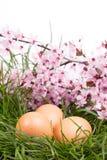 Grama e ovos no fundo branco Foto de Stock