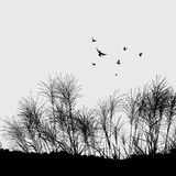 Grama e pássaro Imagens de Stock