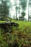 Grama e pedras Fotos de Stock