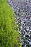 Grama e pedras fotografia de stock