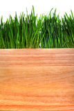 Grama e placa de madeira Fotografia de Stock Royalty Free