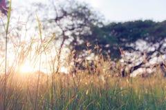 Grama e por do sol Imagem de Stock Royalty Free