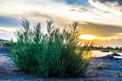 Grama e por do sol de Bush Imagens de Stock Royalty Free