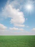 Grama e sol Fotos de Stock Royalty Free