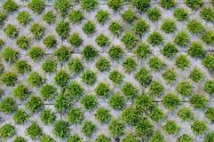Grama e tijolo Fotos de Stock