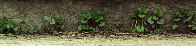 Grama e wildflowers do panorama no fundo de madeira fotos de stock royalty free
