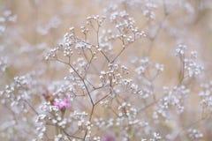 Grama e wildflowers, prado ensolarado do verão Foto de Stock Royalty Free