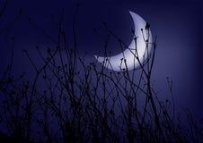 Grama em um céu nocturno do fundo Fotografia de Stock Royalty Free
