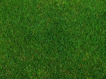Grama em um campo do golfe Imagens de Stock Royalty Free