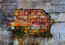 A grama em um emplastro e em uma parede de tijolo danificados velhos Foto de Stock Royalty Free