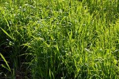 Grama em um prado na primavera sob o céu aberto Fotografia de Stock