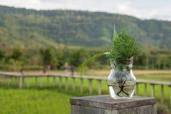 Grama em um vidro com campo verde no fundo Fotografia de Stock Royalty Free