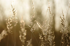 Grama em uma luz solar Fotografia de Stock Royalty Free