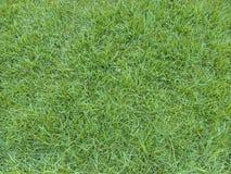 grama esmeralda foto de stock royalty free