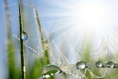 Grama fresca com gotas de orvalho e Web de aranha Fotografia de Stock Royalty Free