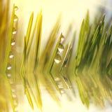 Grama fresca com gotas de orvalho no nascer do sol Fotografia de Stock