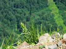 Grama fresca da montanha Imagem de Stock Royalty Free