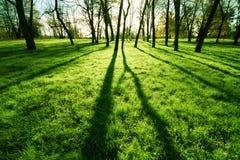 Grama fresca em um parque Fotos de Stock