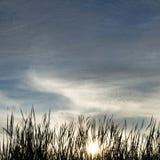 Grama fresca no fundo do nascer do sol Imagem de Stock Royalty Free