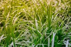 A grama fresca tranquilo nele juventude e glória do ` s representa um novo seja fotos de stock