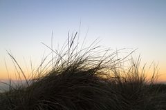 Grama litoral no por do sol, Southborne, Dorset, Reino Unido fotografia de stock