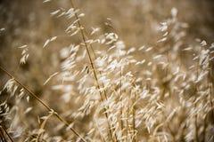 Grama longa na luz do sol Imagem de Stock