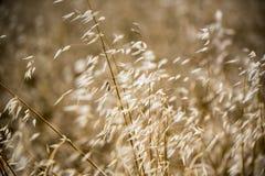 Grama longa na luz do sol Fotos de Stock