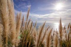 Grama macia no sol Fotos de Stock Royalty Free