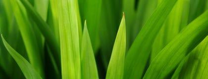 Grama mais verde Foto de Stock Royalty Free