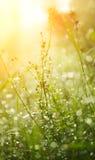 A grama molhada é iluminada com o sol Fotos de Stock