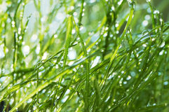 Grama molhada no jardim Fotografia de Stock Royalty Free
