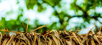 A grama murcha Foto de Stock Royalty Free