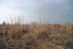 A grama murchada da palha em um seco amarra imagens de stock royalty free