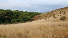 Grama murcho e árvores verdes Fotografia de Stock