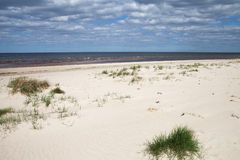 Grama na areia no mar Báltico Imagem de Stock