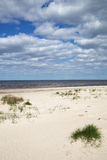 Grama na areia no mar Báltico Foto de Stock
