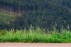 Grama na borda da estrada Fotografia de Stock Royalty Free