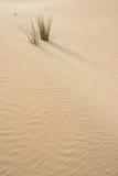 Grama na duna de areia Fotografia de Stock Royalty Free