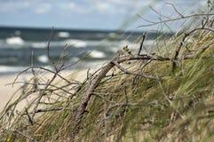 Grama na inclinação de uma duna de areia na perspectiva do mar e do céu azul Imagens de Stock Royalty Free