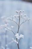 Grama na neve em um campo contra o sol de ajuste por do sol delicado no inverno Imagens de Stock Royalty Free