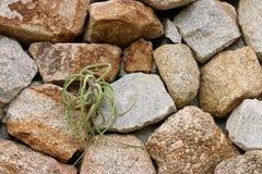Grama na parede de pedra Foto de Stock Royalty Free