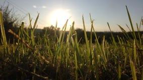 Grama na textura alta do sharp do foco do por do sol Fotos de Stock Royalty Free