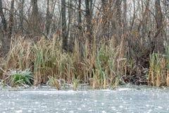 Grama no banco de rio no inverno imagens de stock