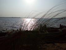 A grama no banco do rio Godavari Imagem de Stock