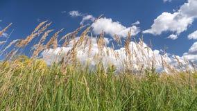 Grama no céu do verão Fotos de Stock Royalty Free